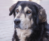 photopage-senior dog 4